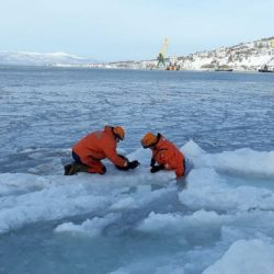 In Kamchatka, EMERCOM employees rendered assistance to the ringed seal caught in ice capture in the Avacha Bay