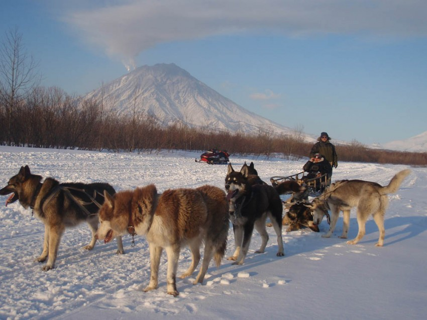 Beringia – sled dog race in Russia. Kamchatka
