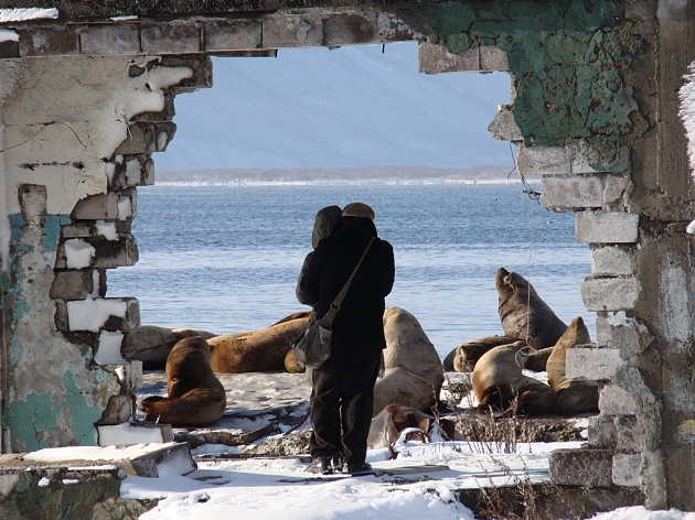 Whether the Steller's sea lion will remain in Petropavlovsk-Kamchatsky depends on people