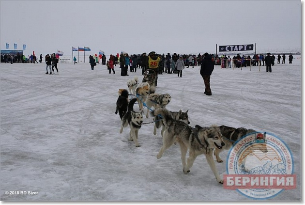 """Beringia-2018"": 1 156 kilometers passed"