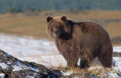 Bears are waking up in Kamchatka