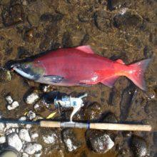Kamchatka: fisherman's paradise