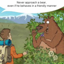 How to protect yourself when meeting a bear