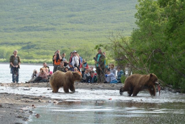 Employee of the reserve died in a fight with a bear on the Kuril Lake
