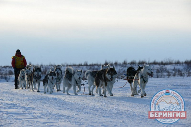 "The distance of dog sledding race ""Beringia"" in 2019 in Kamchatka will reach 1,500 kilometers and connect settlements in four municipal districts of Kamchatka"